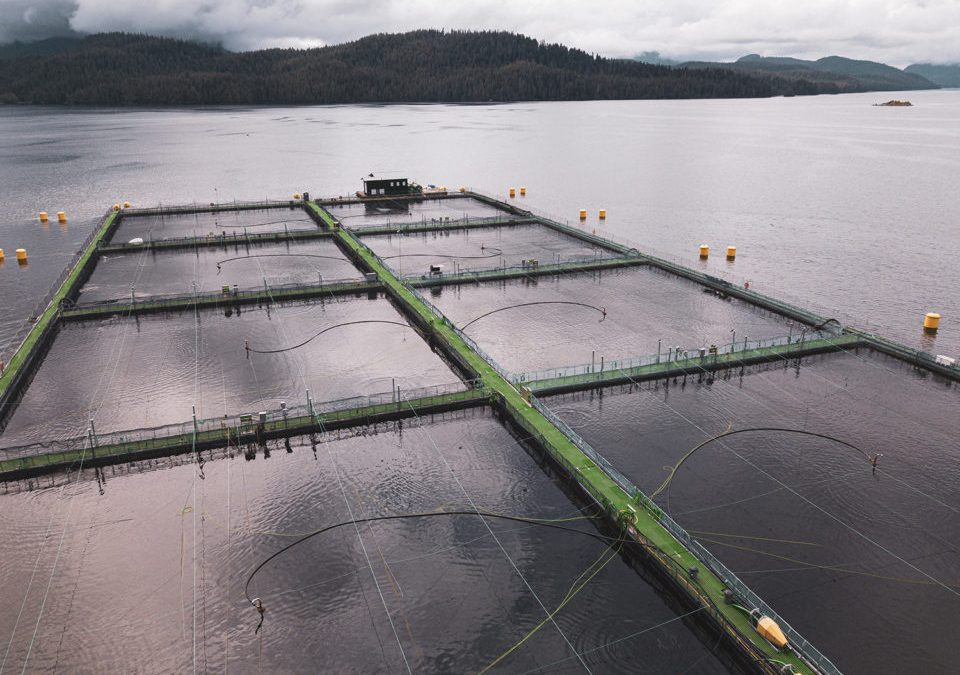 Steel cage salmon farm designer ramping up with capital infusion